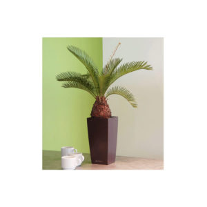 Cycus Palm in Black Maxi Pot for internal use